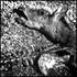 20110125173229-deer_w_spine