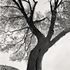 20110224102433-tree_lines__12