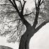 20110224102433-tree_lines__12