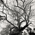 20110224102744-tree_lines__13