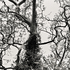 20110224103401-tree_lines__15
