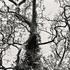 20110224103401-tree_lines__15