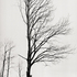 20110224103744-tree_lines__23