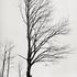 20110224103744-tree_lines__23