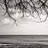 20110224103927-tree_lines__16