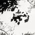 20110224225835-tree_lines__25