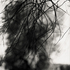 20110224231013-tree_lines__14