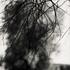 20110224231013-tree_lines__14