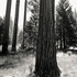 20110224233659-tree_lines__21