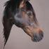 20110128025855-horse2b