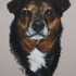 20110128030143-darryl_s_dog_029