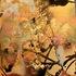 20110128060507-rebirth_11