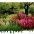 20110128183008-slurry_azalea_paradise_mg_5498