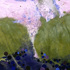 20110130112353-loragroveshome