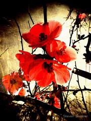 Spring Red 3, Steven Sandner