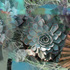 20110203223247-succulent_medley12x18