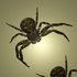 20110205134630-the_arachnids_exit__300_