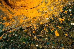 20110208203333-trevor_brown_dirty_puerto_rican_son