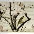 20110210202351-thelanguageofbirds
