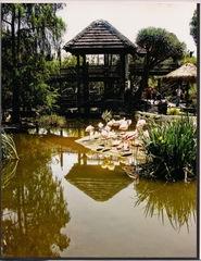 Zoo, Carolyn Ramos