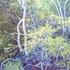 20110213111459-natureza_viva_com_pedra_azul