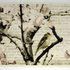 20110214034937-thelanguageofbirds