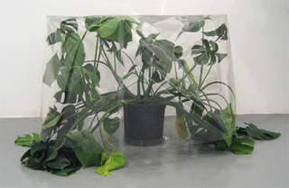 Untitled (plant, box, Seldon Yuan