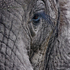 20110214142840-11_eye_of_the_elephant