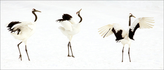 Crane Dance,Sue Carnahan