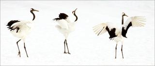 Crane Dance, Susan Carnahan | Menlo Park