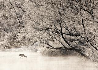 Solitude In Hoar Frost, Susan Carnahan | Menlo Park