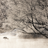 20110215074923-02_solitude_in_hoar_frostjpg