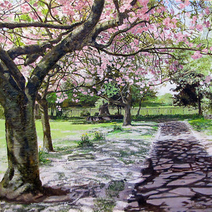 20110618060343-cherry_blossom_spring