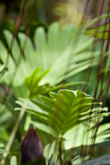 20110217132253-philodendron_with_vines