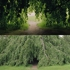 Treetree_sm