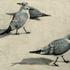 20110223113518-chargulls3_002-1