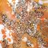 20110223141533-einstein_replenish