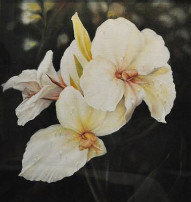 20110227121808-canna_lillies