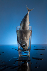 Flailing Fish, Ryan Notch
