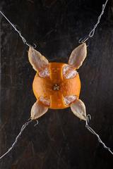 Tangerine Torture, Ryan Notch