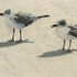 20110302195927-gulls_for_artslant_4_003-1