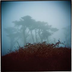 Into the Mist, Ryan Notch