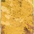 20110305163145-ossuary