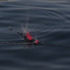 20110307024251-hale_tenger__balloons_on_the_sea__single_channel_video_still__2011