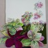 20110318142526-hydrangea_pic_1