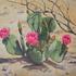 20110320152554-desert_marvel_faa