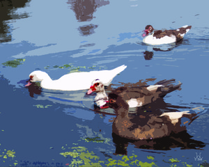 20110323153227-4_mixed_ducks_20x16