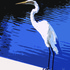 20110323162429-egret_on_blue1-16x20