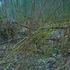 20110327164709-e0n01