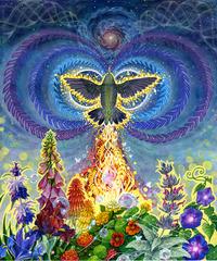 Cosmic Nectar, Jessican Perlstein